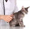 Ветеринарные клиники в Белорецке